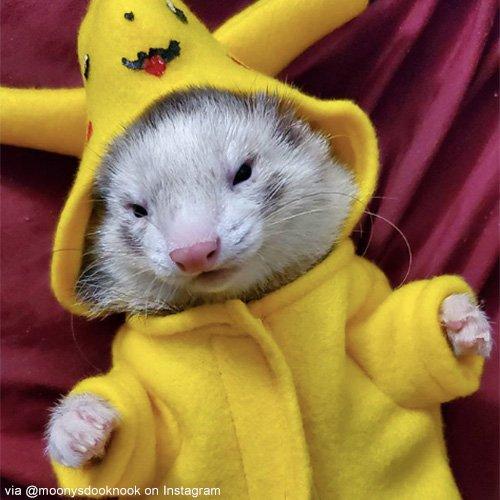 Dog Cat Pet Costume Halloween 2020
